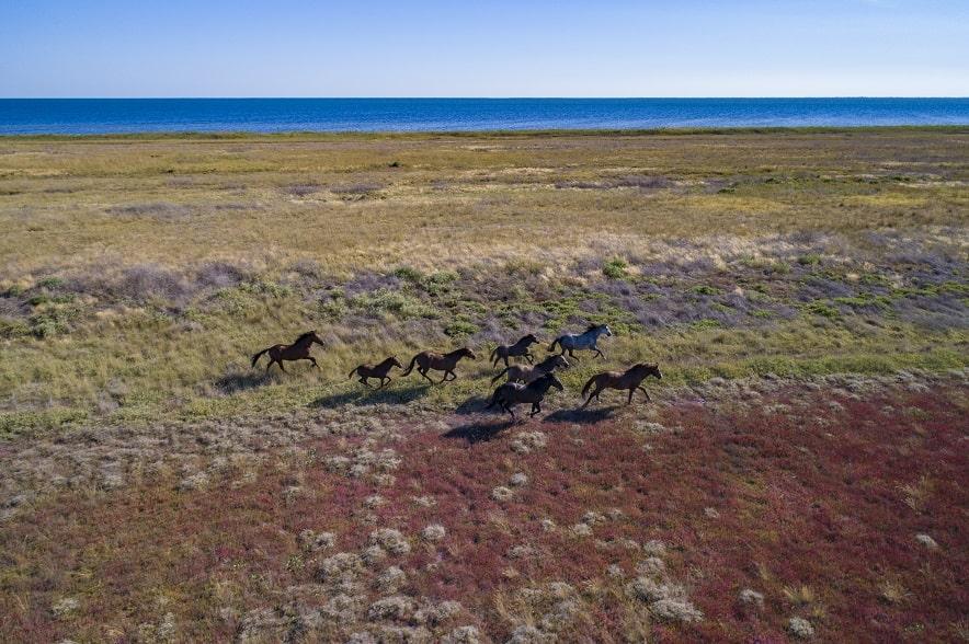 Дикі коні на Кінбурнській косі