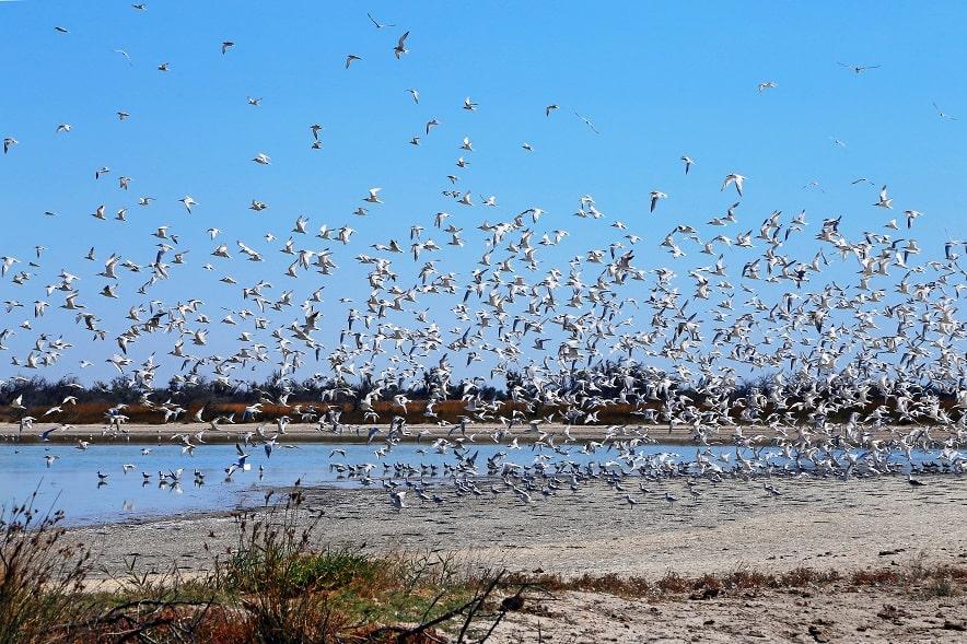 Птахи на Кінбурні