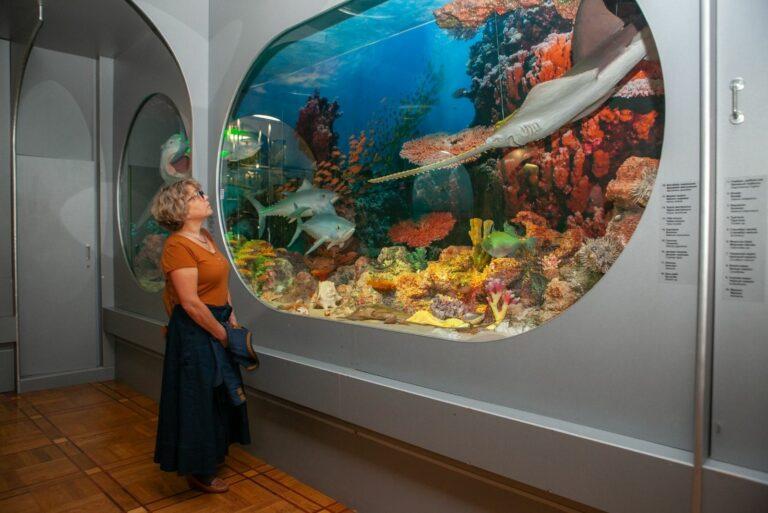 Морская фауна в музее