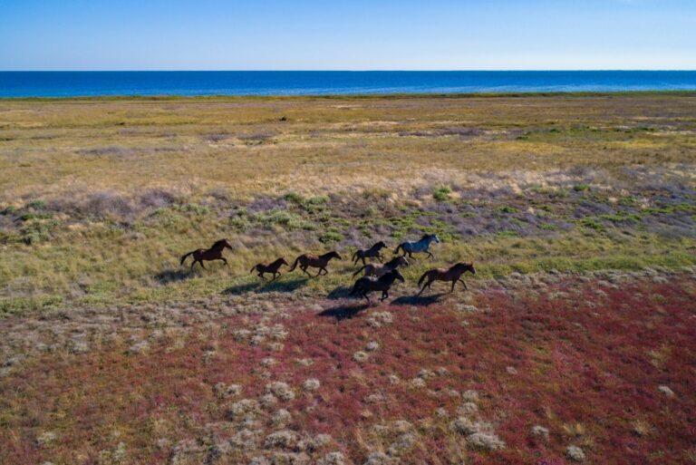 Дикие лошади на Кинбурской косе