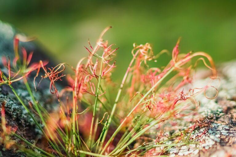 Гарні квіти