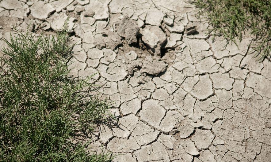 Сухая грязь летом