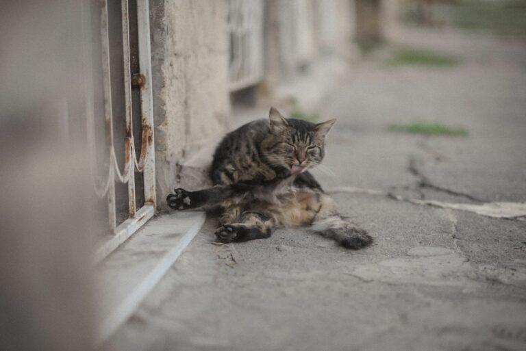 Кот у дворі