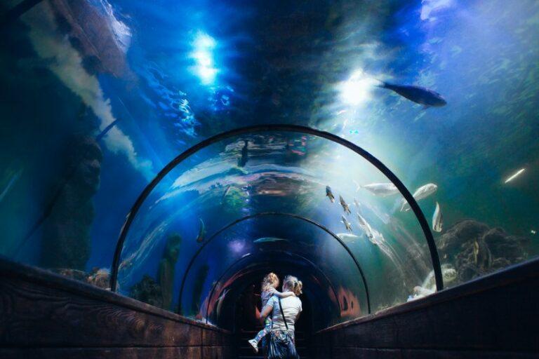 Київський океанаріум