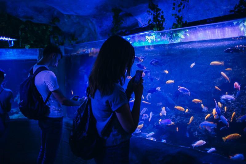 Відвідувачі в океанаріумі