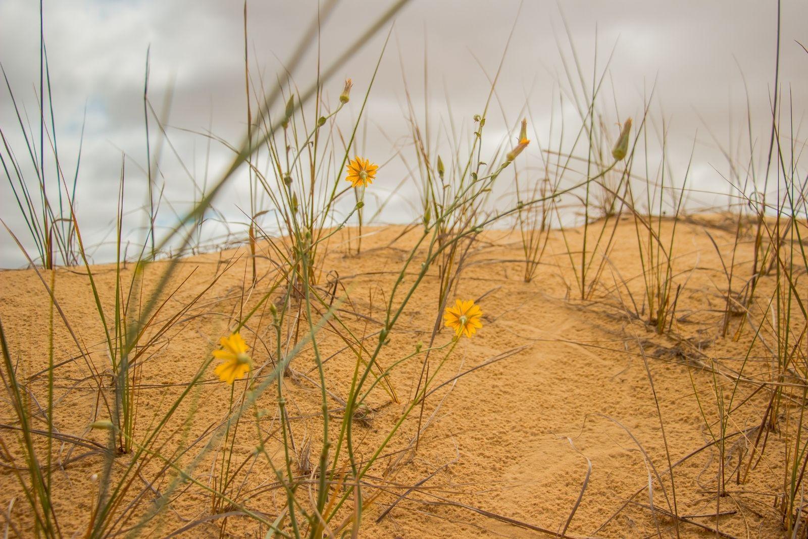 Природа пустелі