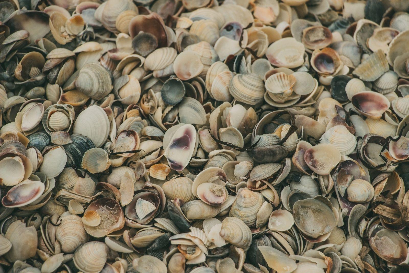 Ракушки на берегу моря