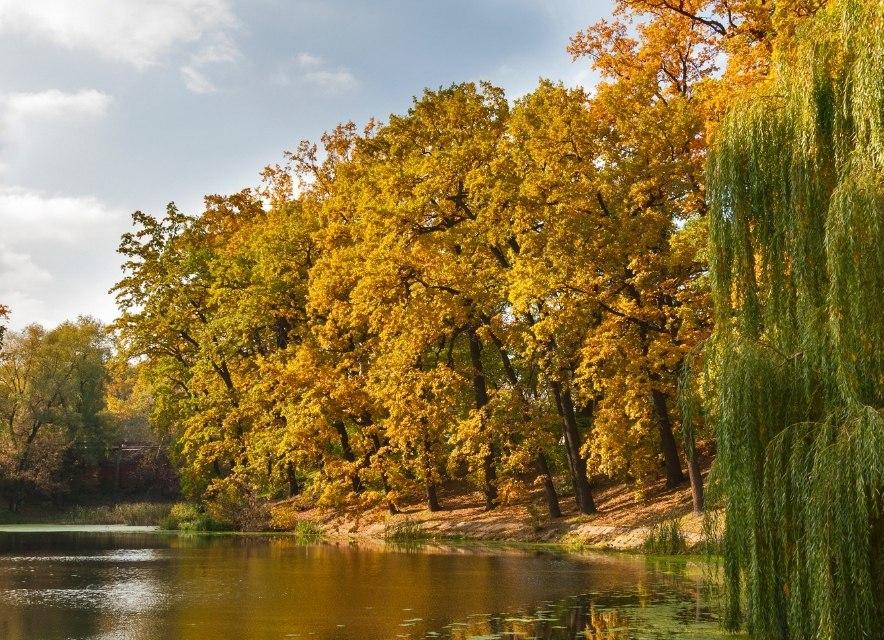 Озеро в Софіївському парку