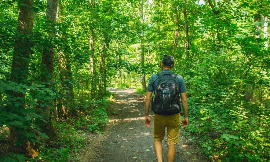 Трикратівський ліс