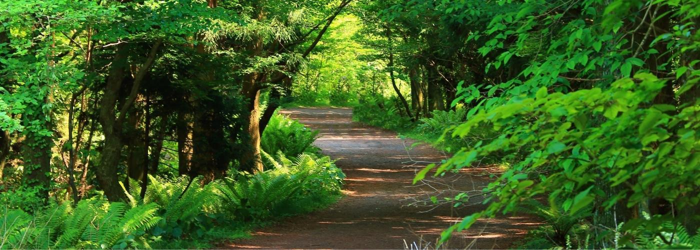 Трикратський ліс: що приваблює тисячі туристів