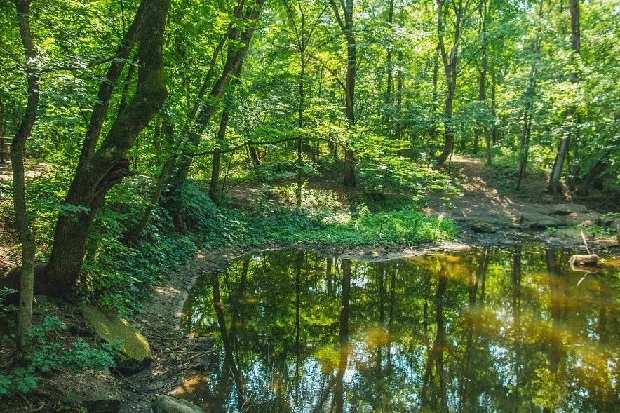 Природа в Трикратському лісі