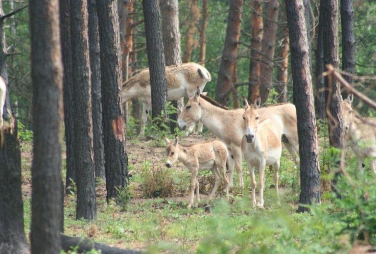 Тварини на території