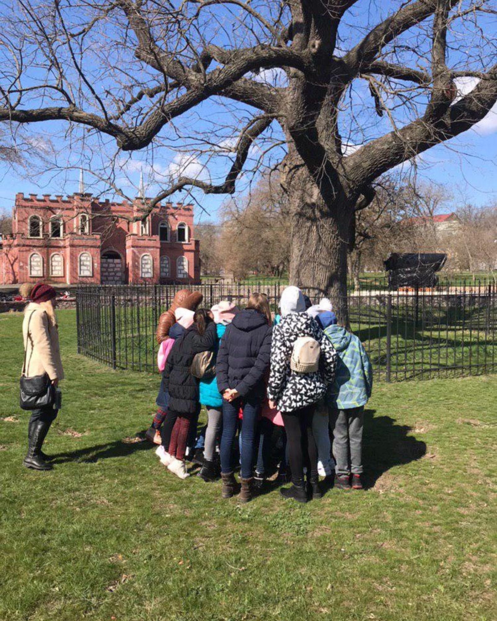 Старий дуб у Херсоні