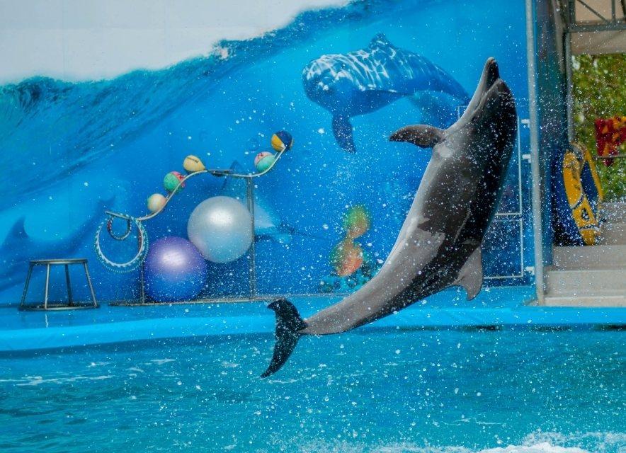 Дельфінарій на Арабатській стрілці