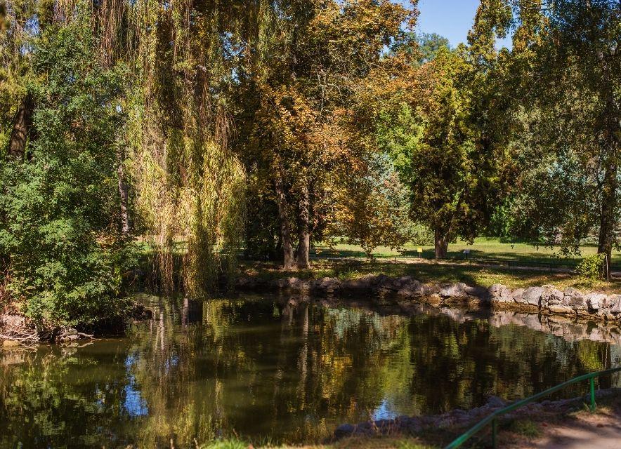 Озеро в дендропарку