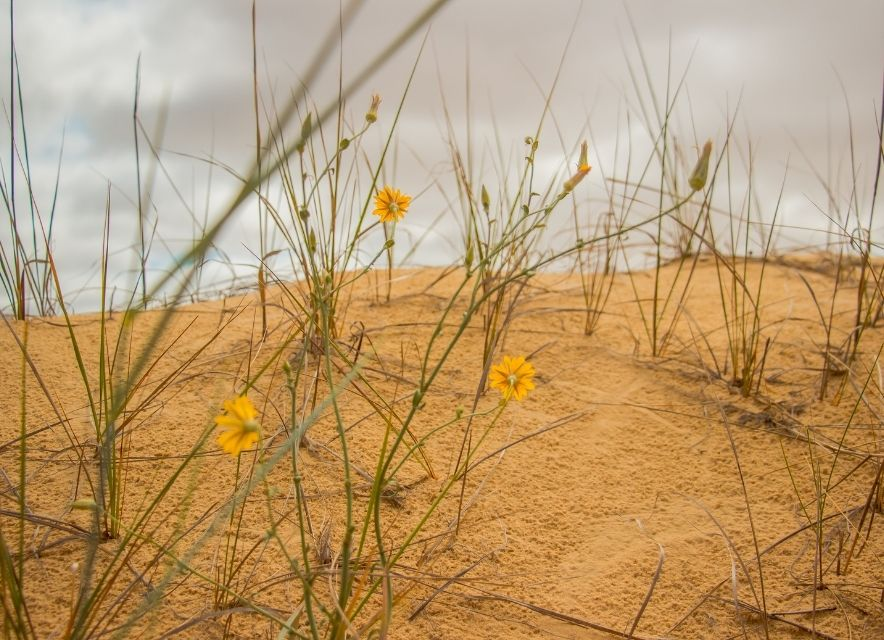 Растительность в пустыне