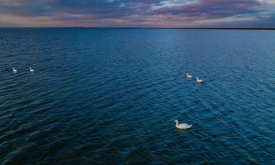 Море Хорли