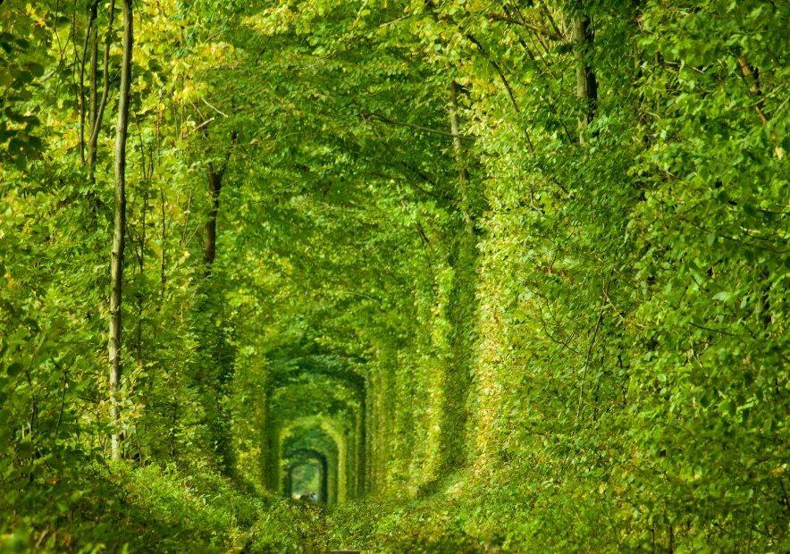 Тоннель любви в Клевани, Ровенская область