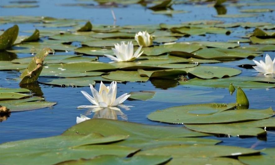 Флора плавнів