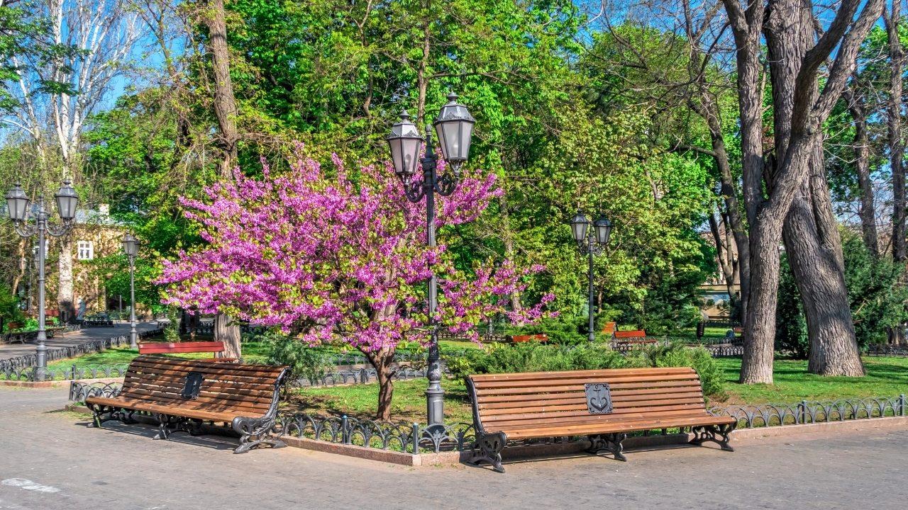 Городской сад в Одессе