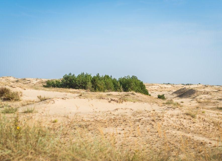 Лес в пустыне