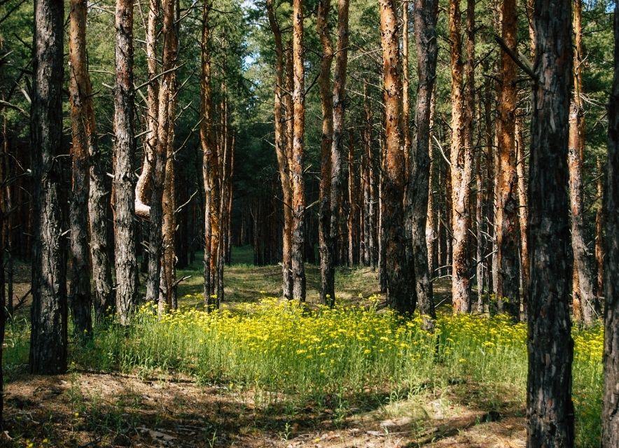 Лес в Олешковских песках