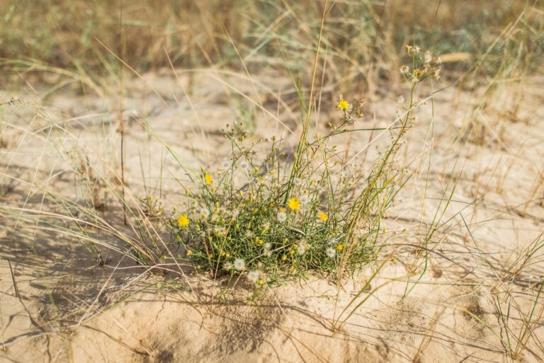Флора пустелі