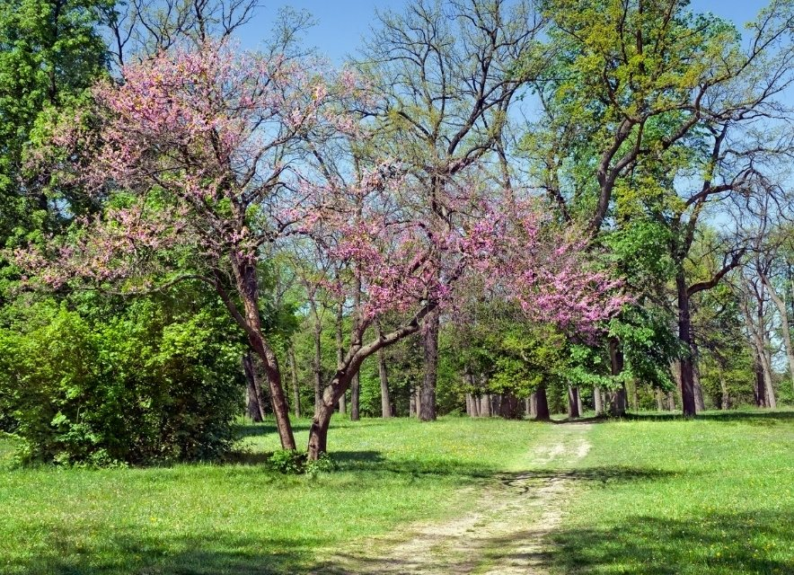 Весна Умань