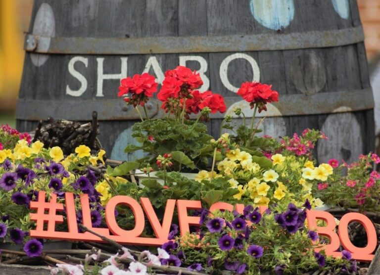 Шабо, Одесская область