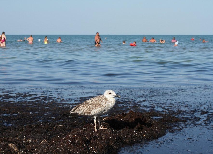Скадовск чайка у моря