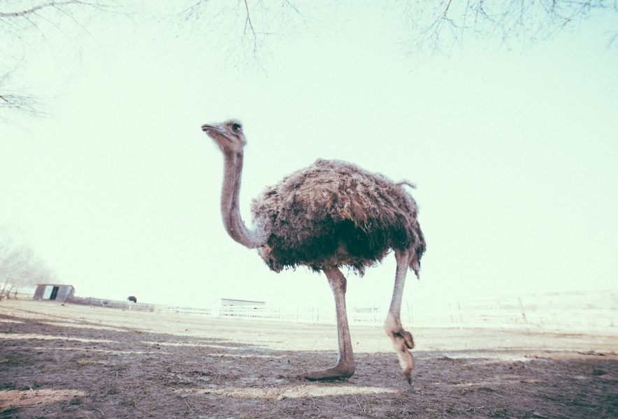Мешканці «Долини страусів»