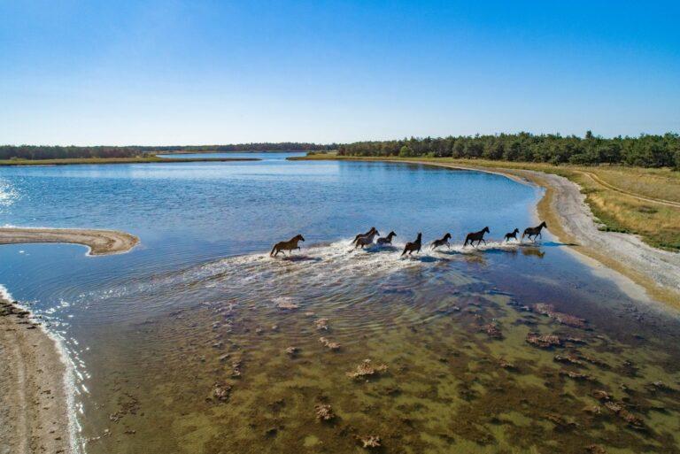 Коні на воді