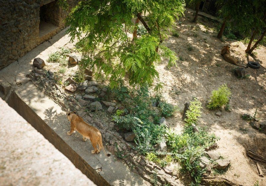 Леви в Демидові