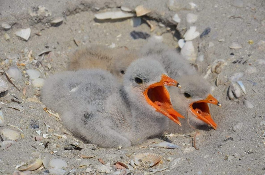 Птицы на острове