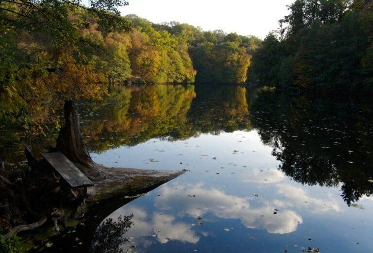 Природа парка Тростянец