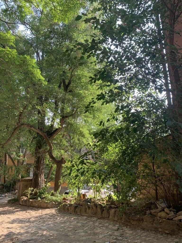 Зелень в херсонском дворике