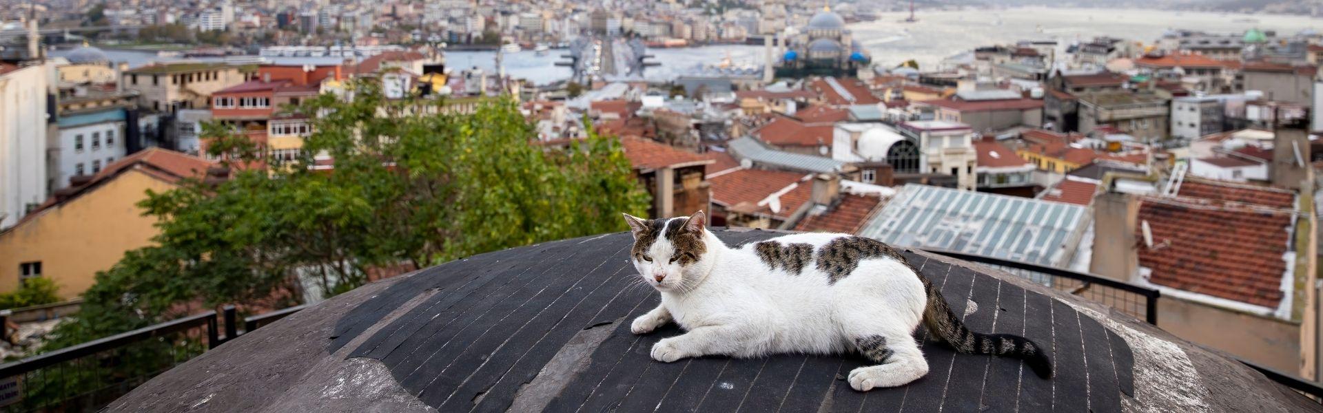 Авторский тур «Крыши Стамбула»