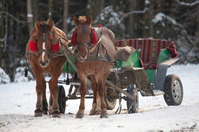 Повозка лошадей